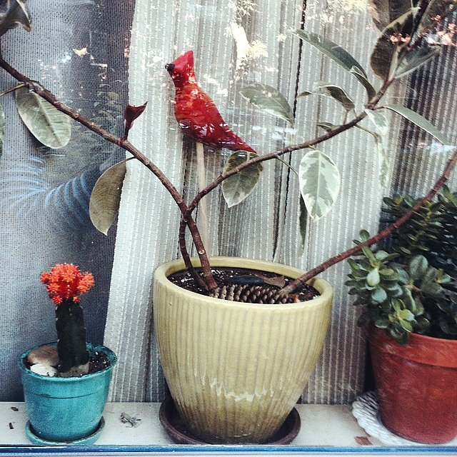 #morning #daycarecommute #brooklyn #newyork #usa #carrollgardens #bird