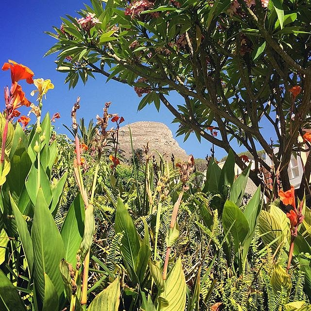 I heard it's snowing in NYC. #myview #couldnotresist #capetown #southafrica #africa #lionshead #frontyard #thisisnotnyc