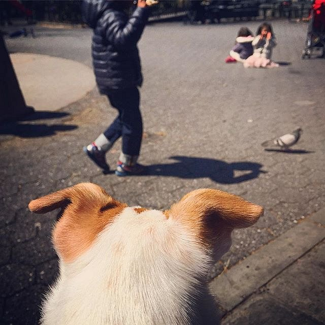 Pigeon! #park #family #pigeon #dog #weekend #brooklyn