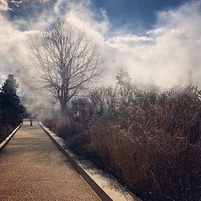 Winter afternoon, Washington DC.