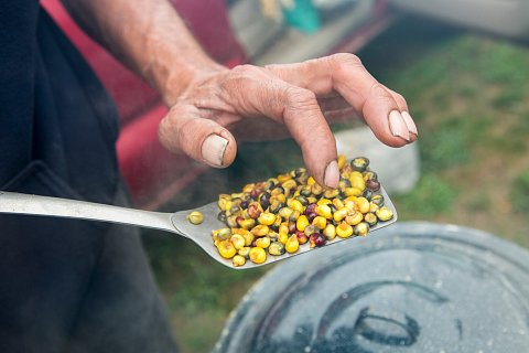 Jack Desjarlait checks the hominy he is preparing at the second annual Red Lake Nation Food Summit on the Red Lake Indian Reservation in northern Minnesota. <br>September 16, 2017.
