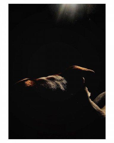 #jackrussell #brooklyn #summersun  #dog #dogsofinstagram